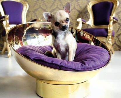 lusso e cani