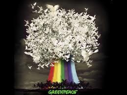irene grandi - greenpeace