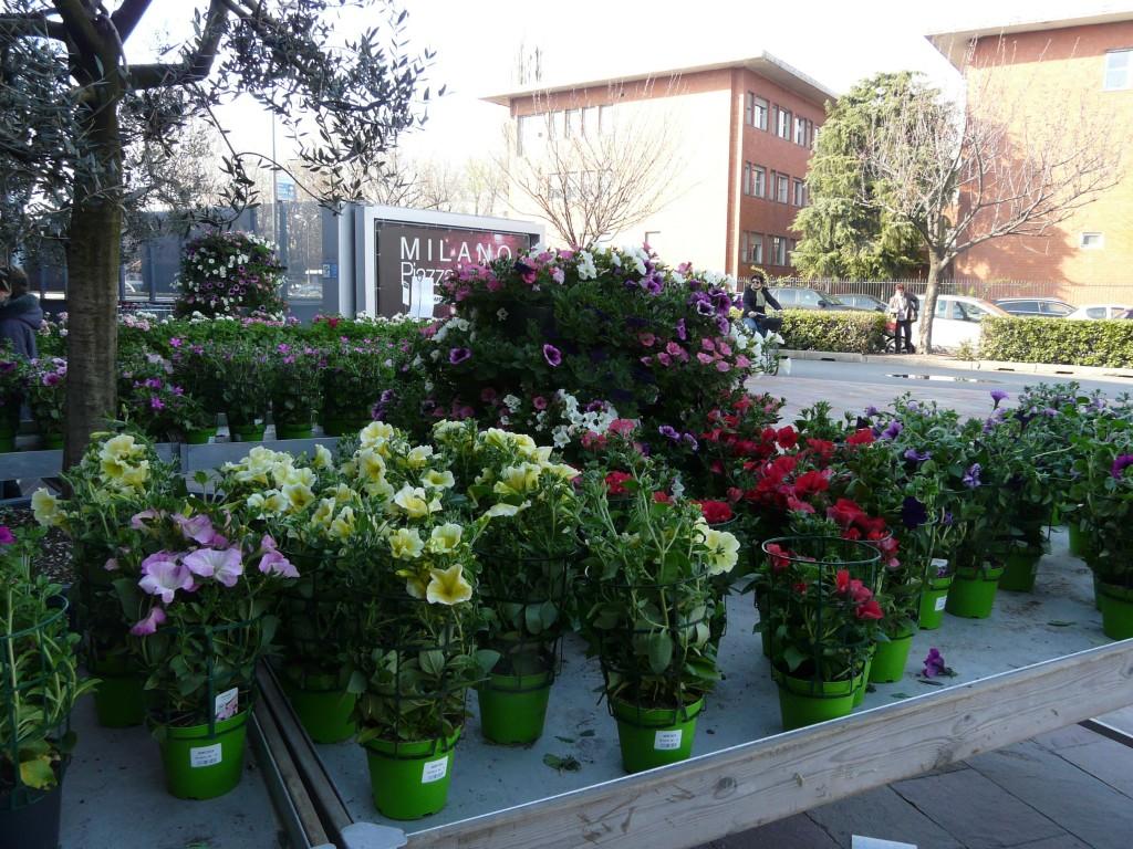 fiori vari