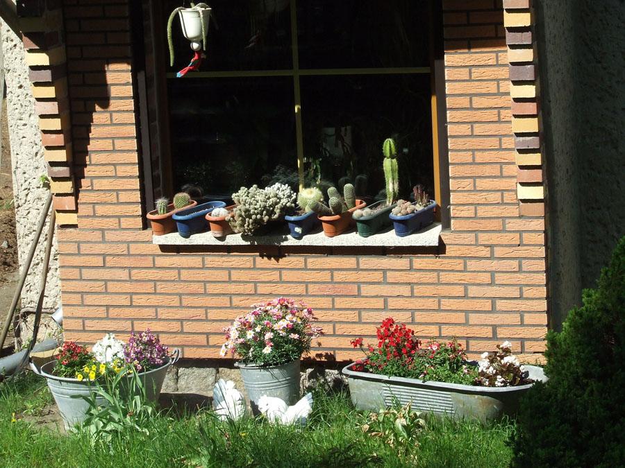 Brandeburgo _cactus