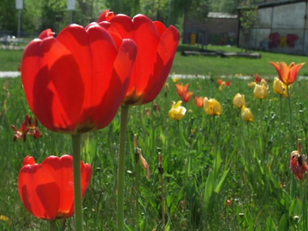 Brandeburgo _fiori