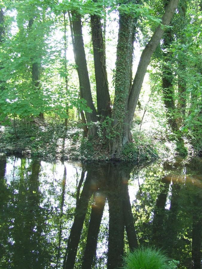 Brandeburgo_alberi