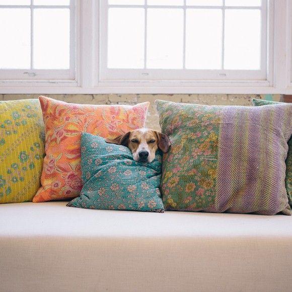 funnydog_look home
