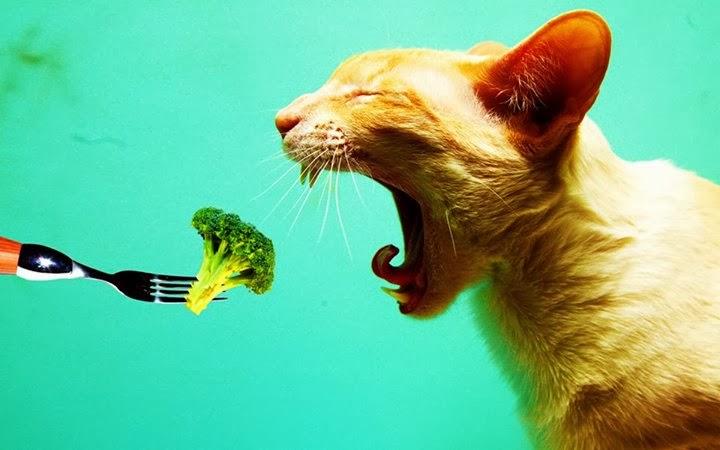 vegetarian style lifestile