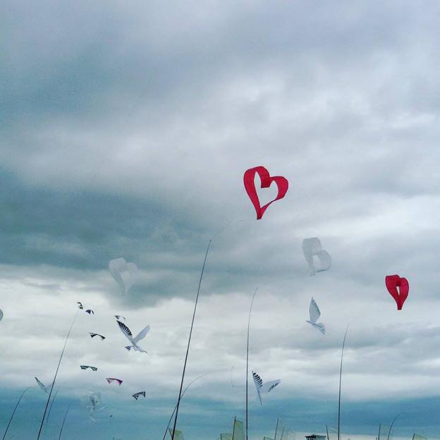 Drachen_Hearts