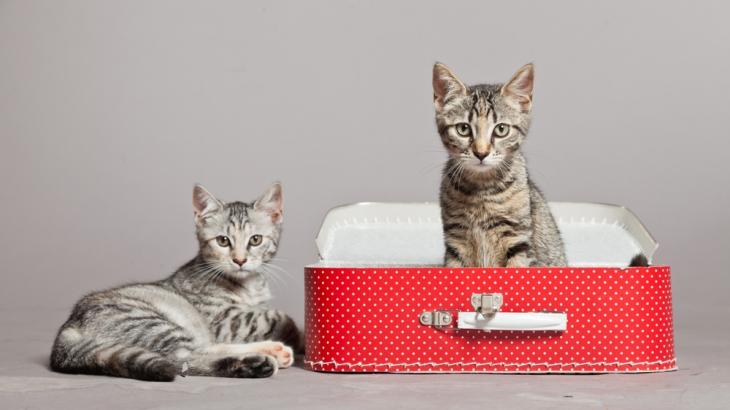 gatti in viaggio lifestyle