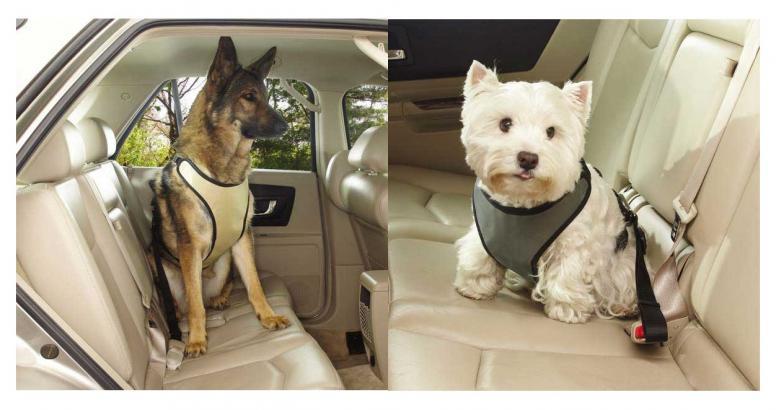 cane sicurezza auto lifestyle