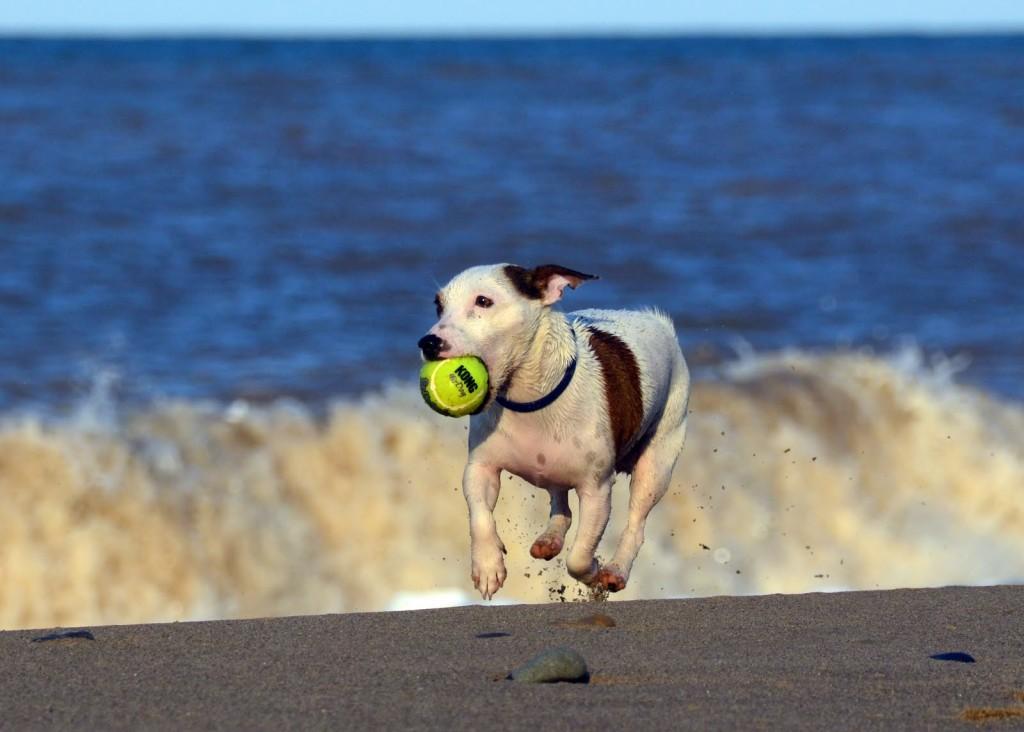 dog at the beach lifestyleù