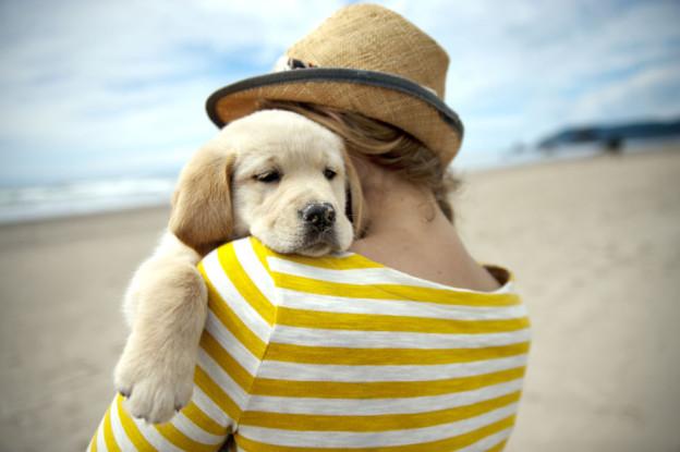 viaggio con cane lifestyle